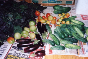 Weblog Food Kimchi Veggies