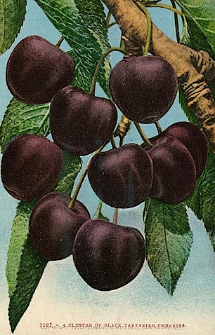 postcards_cherries_2.jpg