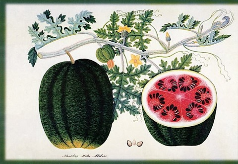 postcards_watermelon_2.jpg